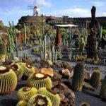 Уникальный Сад кактусов на Лансароте