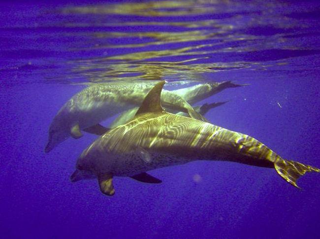 Мир Красного моря